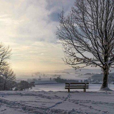 Winterwald Odenwald