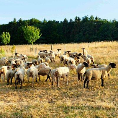 Odenwälder Lammwochen